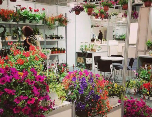 Посетили смо 26. Међународни сајам цвећа и хортикултуре – 28. мај 2021.
